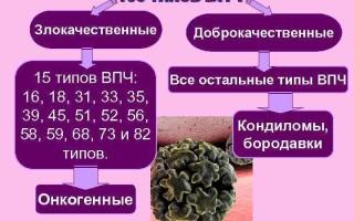 Типы ВПЧ у мужчин и женщин