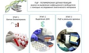 Анализ ПЦР. Диагностика ВПЧ — высокого риска онкогенности.